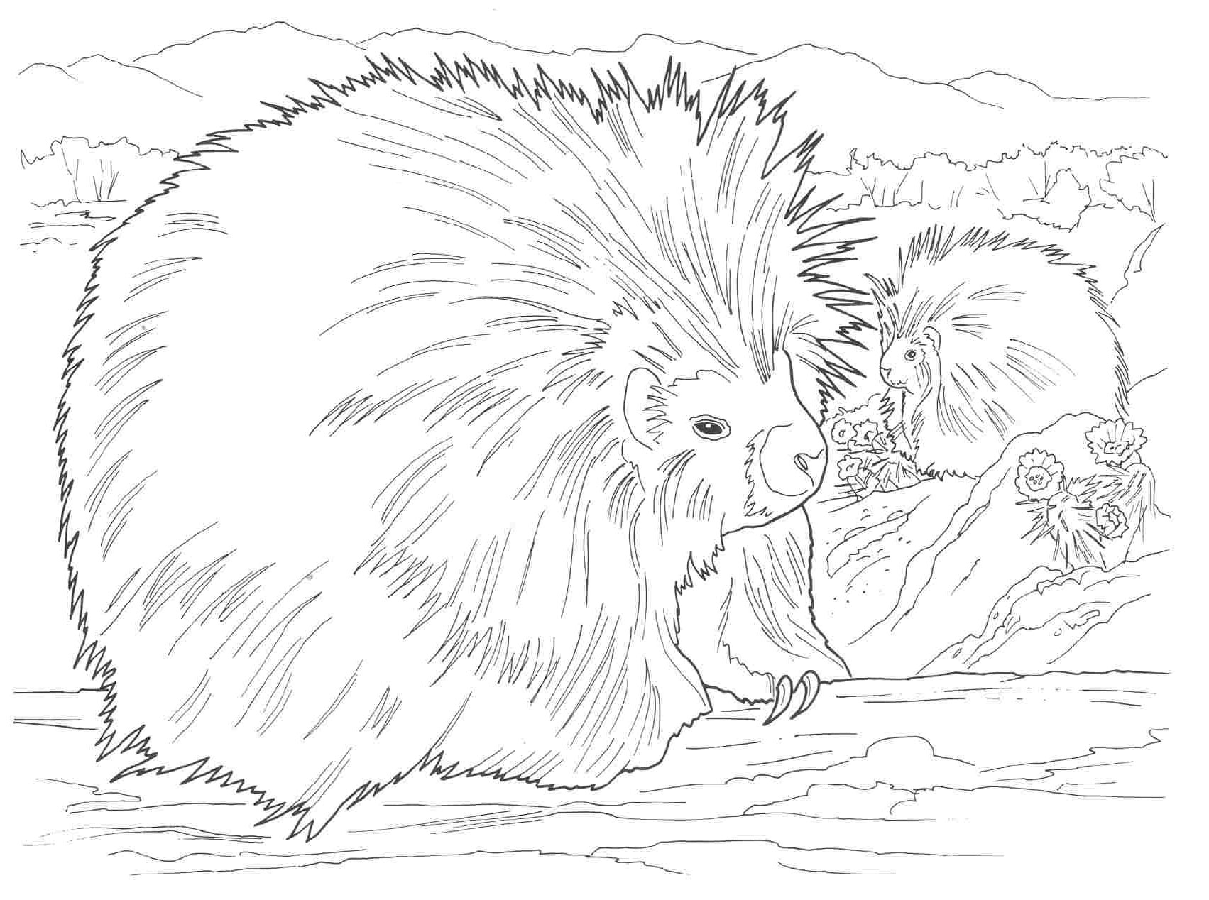 Free Coloring Pages Of Nocturnal Animals : Free nocturnal animals coloring pages
